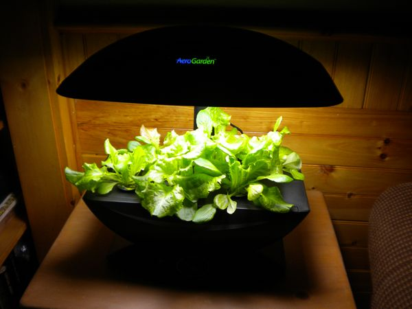 CoopCam in Mashpee Blog Archive Indoor Gardening